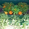 Helen Stock Designs offers container gardening and window box designs for businesses and homes